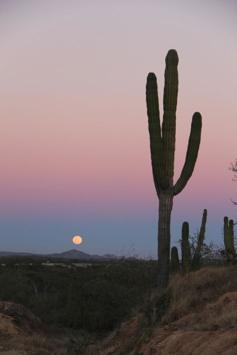 cardon cactus in baja california sur You are in the right place about California house Here we offer you the most beautiful picture Desert Aesthetic, Photo Wall Collage, Baja California, Ciel, Aesthetic Wallpapers, Places To Travel, Travel Destinations, Instagram, Scenery Photography