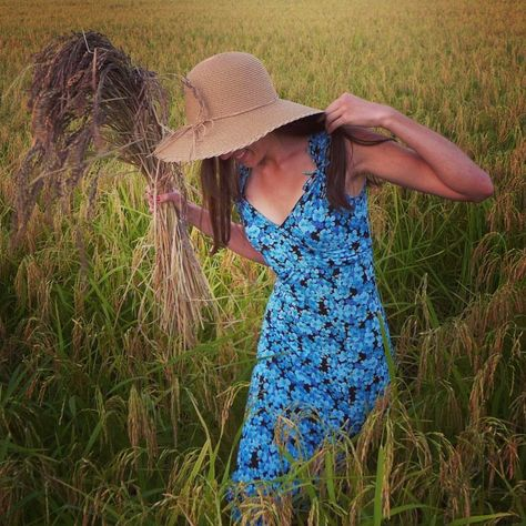 visitveneto Il riso cresce, la bellezza...