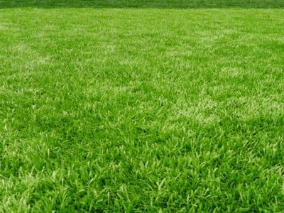 Lowering Ph Of Grass How To Make A Lawn More Acidic Acidic Grass Lawn Lowering Grass Textures Grass Seed Lawn