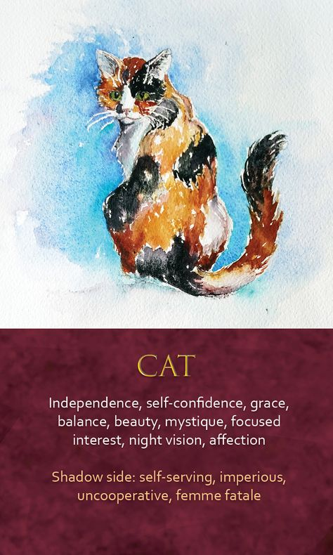 Spirit Animal Awareness Oracle Cards - CatButterfly Symbolism - Butterfly Dream Meaning, Butterfly Mythology and Butterfly Spirit Animal Meanings Full Butterfly Spirit Animal, Cat Spirit Animal, Animal Spirit Guides, Animal Meanings, Animal Symbolism, Butterfly Symbolism, Animal Medicine, Cat Medicine, Spiritual Animal