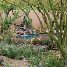 Elegant Desert Gardening For Wildlife   Phoenix Home U0026 Garden