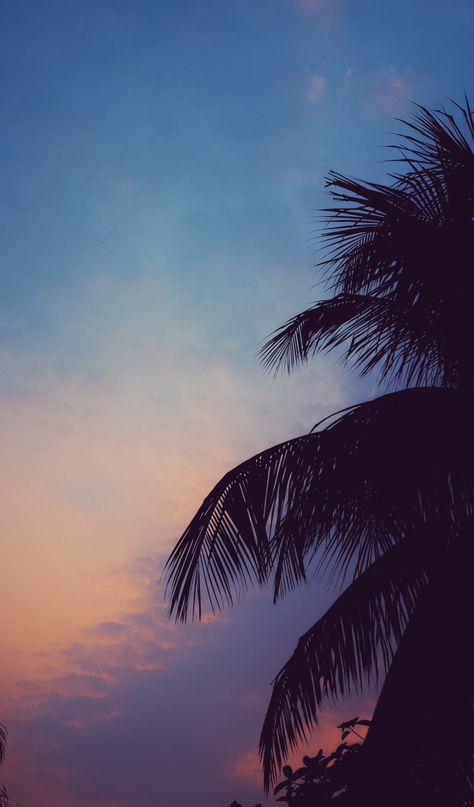 Palm Tree  | Smart Phone Wallpapers  #4kphonewallpapersreddit #iphonewallpapersreddit #redditwallpapers