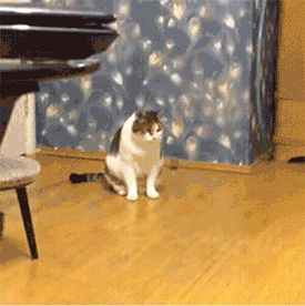 Funny cats of the weekif #4 doesn't make your laugh