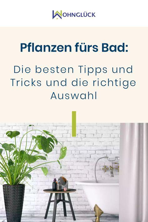 Pflanzen Im Bad Die Besten Tipps Tricks Fur Jedes Badezimmer Pflanzen Furs Bad Pflanzen Im Badezimmer Und Tipps