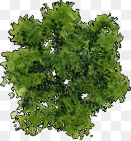aerial tree png image result for aerial view of an oak tree | trees top view