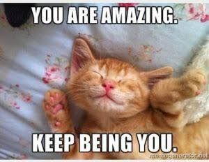 Cats Love Follow Photooftheday Catpics Medical Coding Classes Medical Coding Daily Positive Affirmations