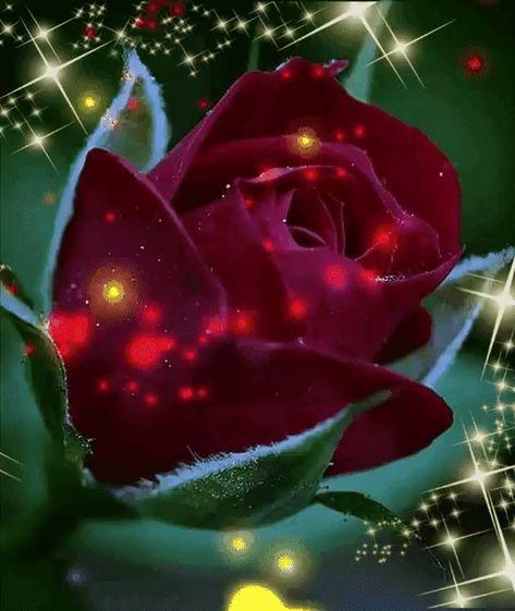 Идеи на тему «Розы gif» (900+) | розы, цветы, красивые розы