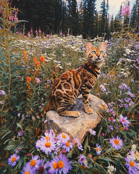 Suki the adventurous Canadian cat