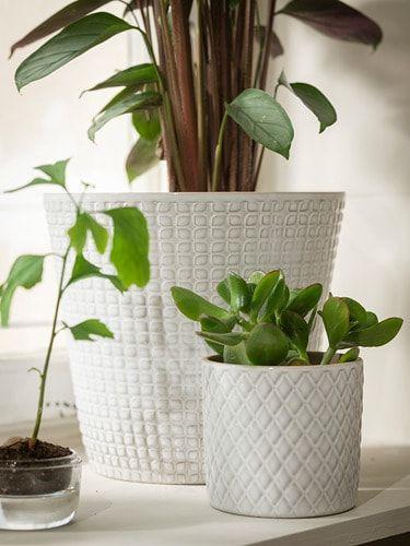 Chiafrön Osłonka Doniczki Biały In 2019 Ikea Plants