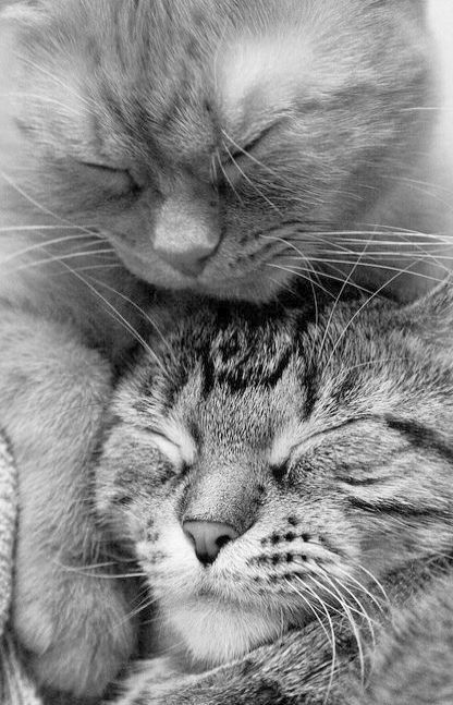 I M Going On An Adventure Kittens Cutest Cat Having Kittens