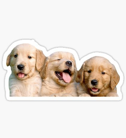 Dog Stickers Pegatinas Bonitas Golden Retrievers Pegatinas