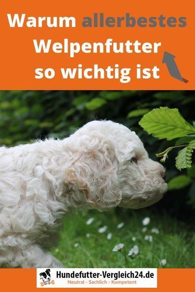 Welpenfutter Nur Das Beste Ist Gut Genug Hundefutter Vergleich24 De Hunde Futter Hundefutter Welpen