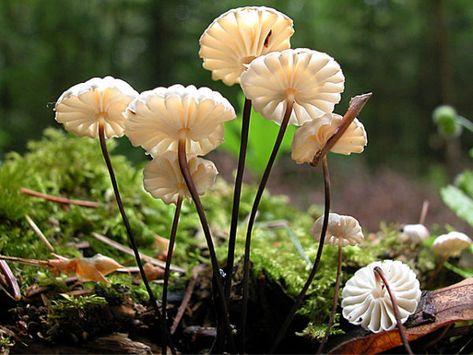 Lysostopek Szpilkowy Grzybek Leczniczy O Wielostronnym Dzialaniu Plants Flowers Dandelion