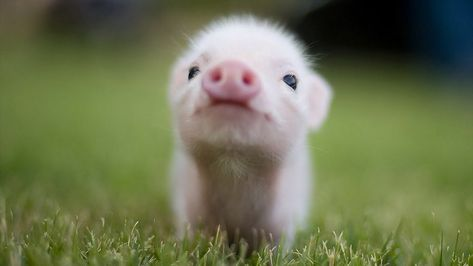 Top 15 Cutest Baby Animals