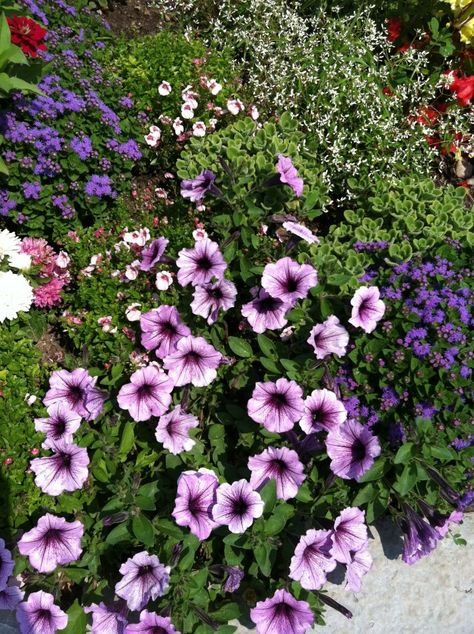 Mackinaw Island Gardens
