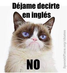 Spanish Grumpy Cat Dejame Decirte En Ingles No Spanish Teacher Memes Spanish Memes Funny Spanish Memes