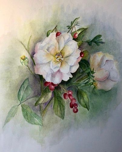 Roses Blanches Aquarelles Roses Blanches Aquarelle Et Rose