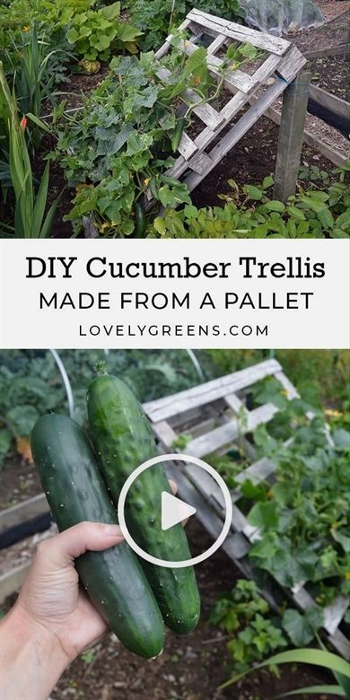 Keep Your Plants Happy With The Following Tips 2020 Cucumber