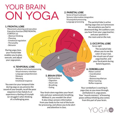 Much has been written recently about yoga and its effect on brain health.  Take a look at this interesting infographic to get some understanding about the different areas of the brain