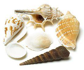 Approx 24 shells, $0.78