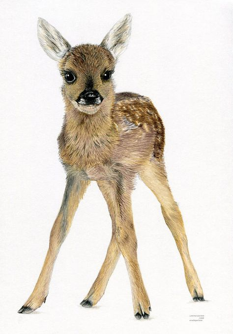 FAWN Baby Roe Deer British WIldlife Limited Edition art colour