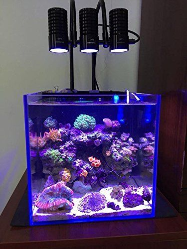 Marine Led Light Coral Sps Lps Grow Mini Nano Aquarium Sea Reef Tank White Blue Purple Hang On Bend Fix Review Https Aquari Reef Tank Nano Reef Tank Aquarium