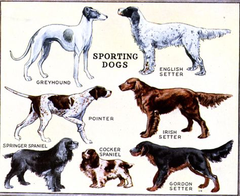 Dog Breed Chart Google Search Dog Breeds Chart Toy Dog Breeds