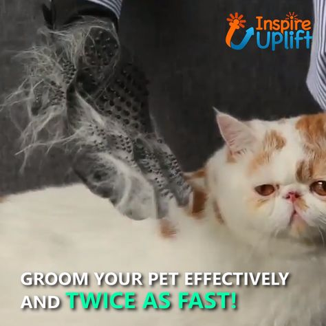 Pet Grooming Gloves - ⭐⭐⭐⭐⭐ (5/5)  Forget about shedding! With our Pet Grooming Gloves, all that shedding and hairy furniture will seem like just an awful nightmare. Now you can eliminate those pesky hairballs before they appear, once and for all!  Currently 50% OFF with FREE Shipping!