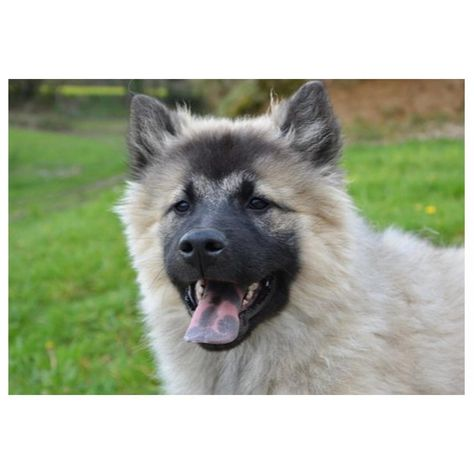 Isnt it awesome?  Love Dogs? Visit us by clicking active link on our bio/profile.  #dog #dogs #dogsofbuffalo #doglovers #dogsofdenver #dogsofny #dogsoninsta #dogsphotography #dogstagram #dogsofaustralia#dogsports #dogschool #dogsday #dogslike #dogsofatlanta #dogsofdallas #dogsofottawa #dogsofPhilly #dogsofsanfrancisco #dogspam #dogsupplies #dogsandbabies #dogsofinstamedia #dogsoflondon #dogsoverdiamonds #dogsquad #dogsthatexplore #dogsofhawaii #dogsofontario #dogshirts