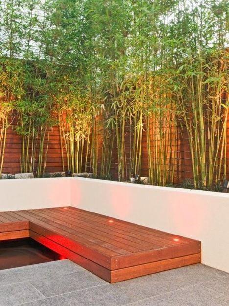 Image result for bamboo garden   garden   Pinterest   Bamboo garden