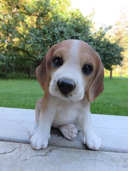 Beagle Puppy 6 In Dog Sitting