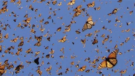 Full Screen Hd Butterfly Wallpapers Wallpaper Cave In 2021 Blue Butterfly Wallpaper Aesthetic Wallpapers Aesthetic Desktop Wallpaper Wallpaper cave tattoo wallpaper hd