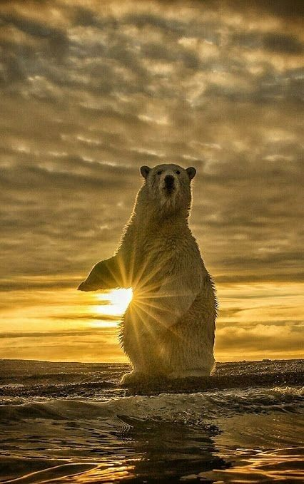 Wildlife Photography For More Inspiration Follow Me On Instagram National Geographic Photography Wildlife Photography National Geographic Animals