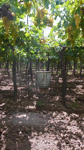 Mendoza, Argentina Wineries and Vineyards
