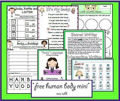 1st grade human body printable unit
