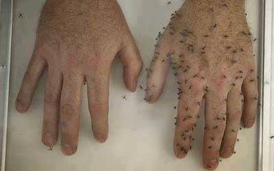 Anti-moustique maison (également pour les fourmis et puces) et exempt de produits chimiques.