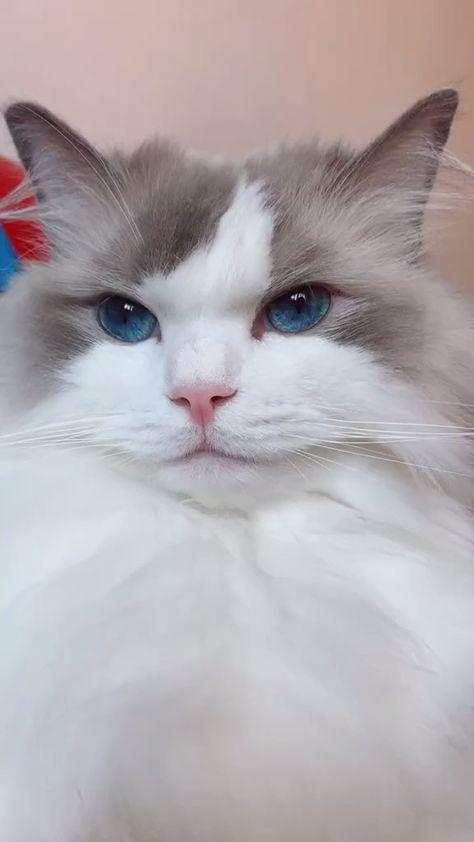 #cats #pets #funnycats #petsupplies
