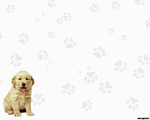 This dog template has a Labrador Retriever embedded into a PowerPoin Presentation