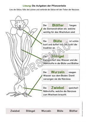 Frühblüher Werkstatt Frühblüher Grundschule