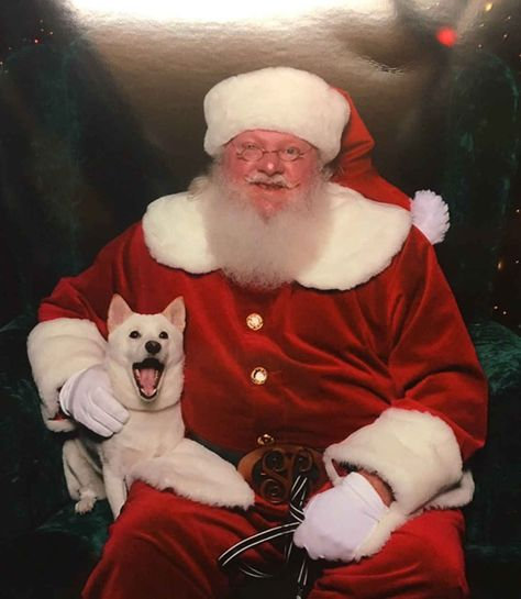 Dog Obsessed With Stuffed Santa Toy Gets To Meet Her Idol In Real Life - Dog obsessed with stuffed santa toy gets to meet her idol in real life