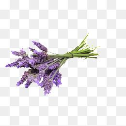 Lavender Flowers Purple Flower Png Transparent Clipart Image And Psd File For Free Download Free Watercolor Flowers Flower Png Images Watercolor Flowers