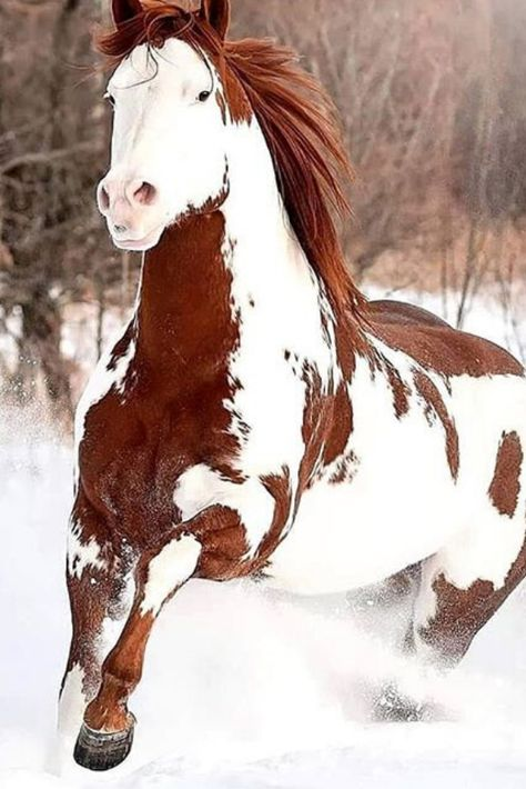 A Lovely Horse Is Always An Experience