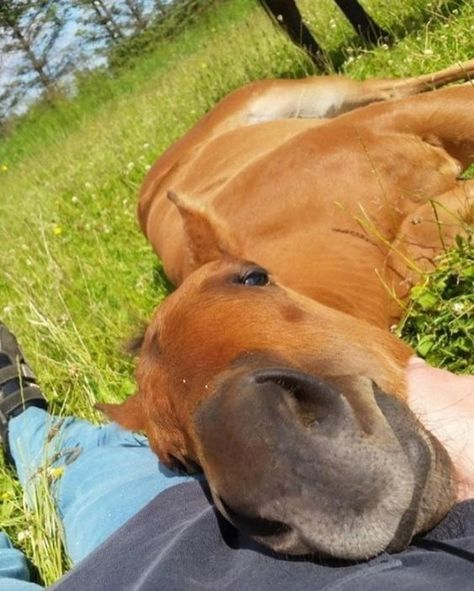 14 Photos of Beautiful and Funny Horses Funny Horses, Cute Horses, Pretty Horses, Horse Love, Beautiful Horses, Animals Beautiful, Horse Pictures, Animal Pictures, Horse Photos