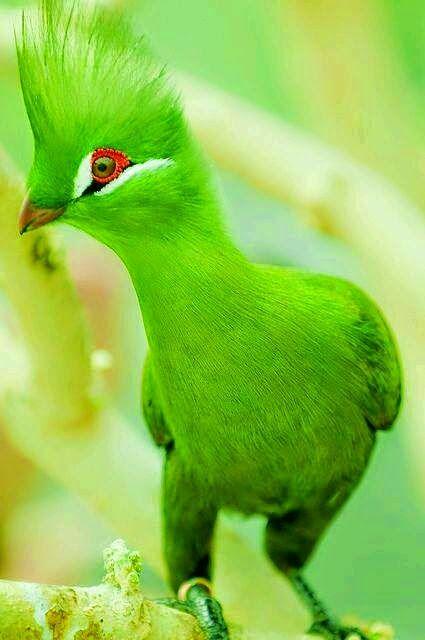 موسوعة أجمل صور طيور برية نادرة بألوان رائعة مداد الجليد Animals Beautiful Beautiful Birds Colorful Birds