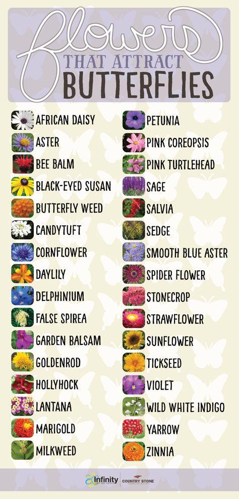 400 Butterfly Gardening Ideas Butterfly Garden Butterfly Plants