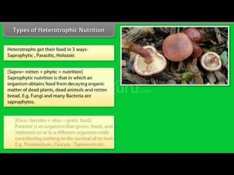 Types Of Heterotrophic Nutrition A Plus Topper Nutrition Organic Matter Fungi