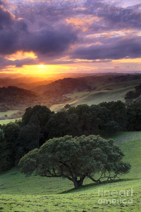 Hillside Photograph -  Oak Trees And Green Grass On Hills Over Valley At Sunset by Gary Crabbe