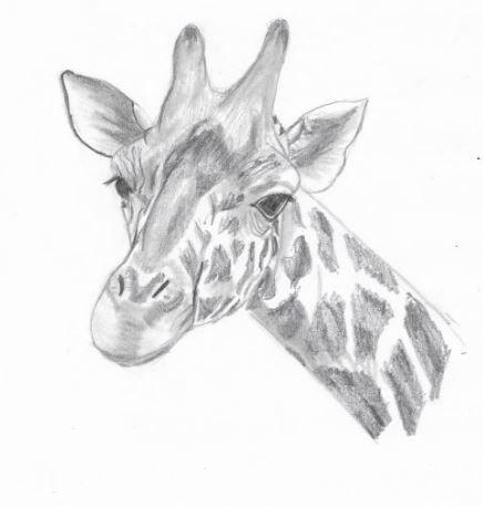 Dessin Facile Animaux Girafe