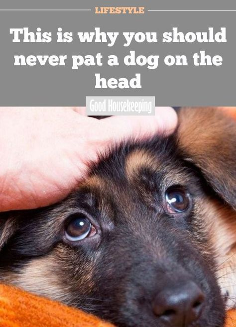 This Is Why You Should Never Pat A Dog On The Head Dogs Baby