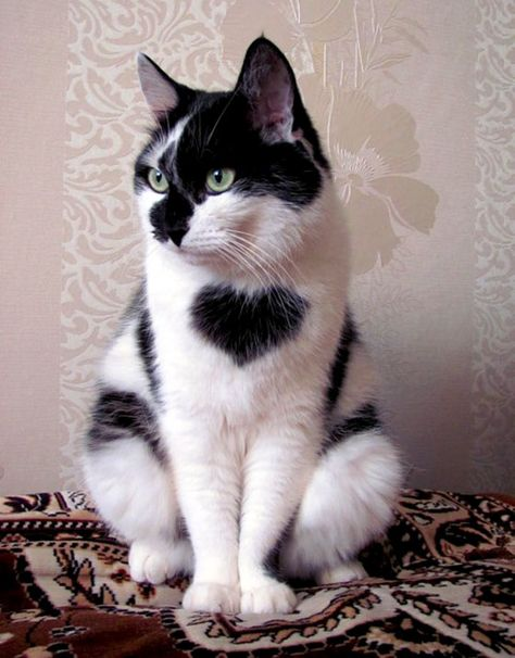 ~♥~This gem wears his heart on his chest.